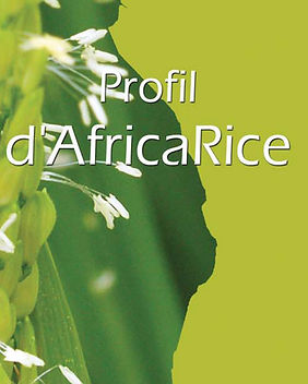 profil dAfricaRice.jpg