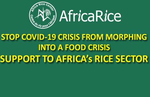 STOP COVID-19 CRISIS MORPHING INTO A FOOD CRISIS : SUPPORT TO AFRICA's RICE SECTOR