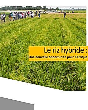 hybrid rice-fr.jpg