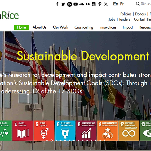 AfricaRice launches new bilingual corporate website
