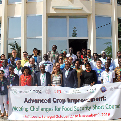 AfricaRice teams up with Colorado State University, Cornell University and IRD