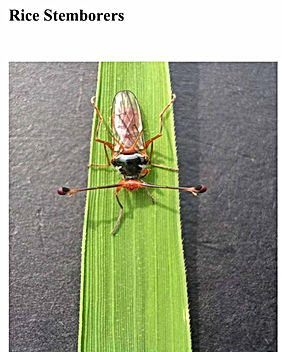 Insect Guide.jpg