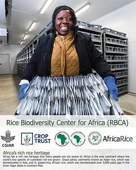 Rice Biodiversity Center for Africa.jpg
