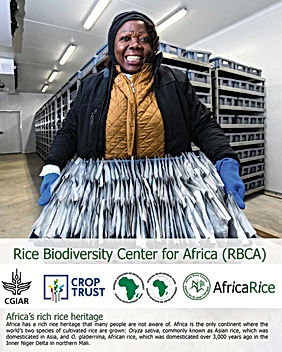 Rice Biodiversity Center for Africa.jpg