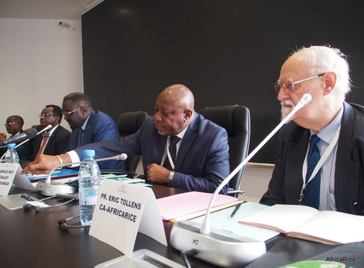 31st Session of AfricaRice Council of Ministers to convene in Dakar, Senegal