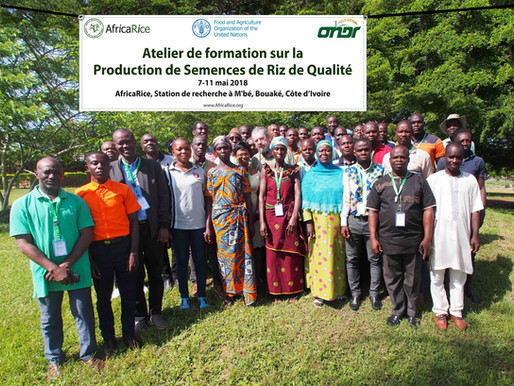 Ivorian seed producers trained in quality rice seed production at AfricaRice M'bé Research Station