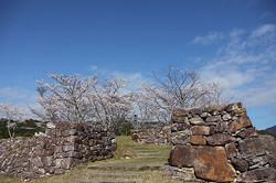 赤木城の桜(熊野市紀和町)