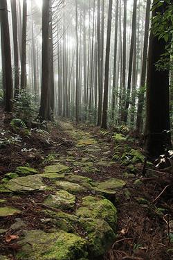 通り峠(熊野市紀和町)