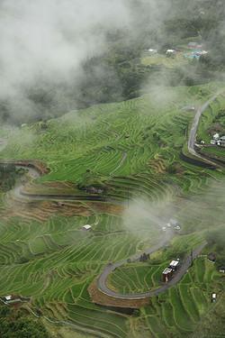 展望台から見た丸山千枚田(熊野市紀和町)