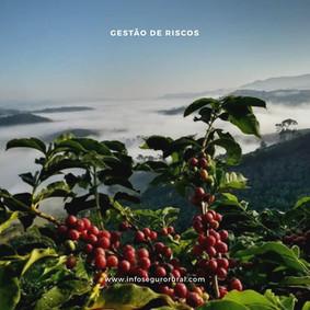 Cafeicultura mundial debate como compartilhar riscos com toda a cadeia.