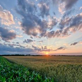 Podemos confiar no novo Plano Trienal do Seguro Rural ?