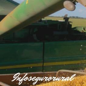 Diretrizes para armazenamento seguro de grãos