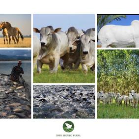 Saiba a importância dos Seguros: Pecuário, de Animais e Aquícola.