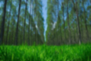 getaf-imagem-servios-gesto-de-florestal-