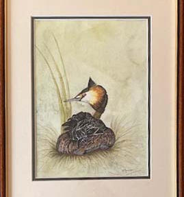 Great Crested Grebe. watercolour & ink