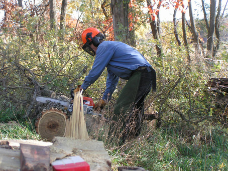The Simple Act of Felling a Tree