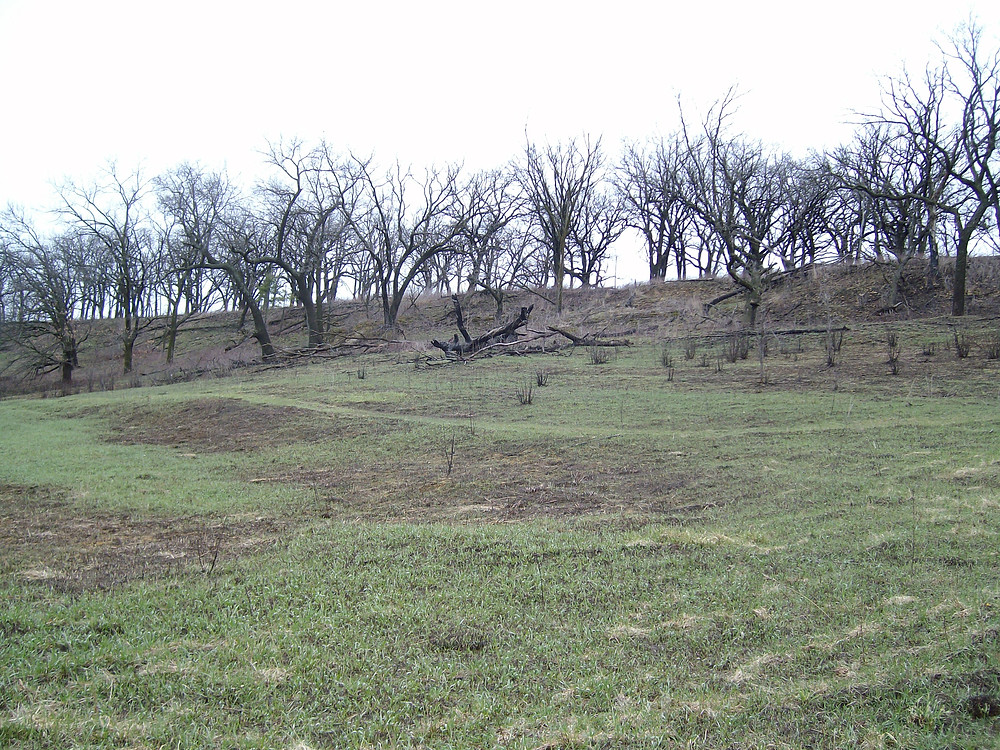 hillside of green