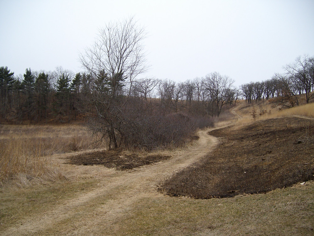 Shrub thicket with fuel burned out around it.