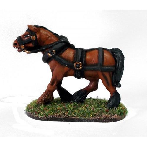 Heavy Draft Horse B