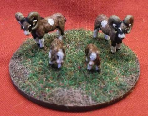 Mouflon Sheep