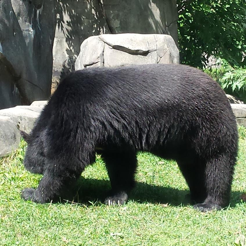 zoo 20170816_125241