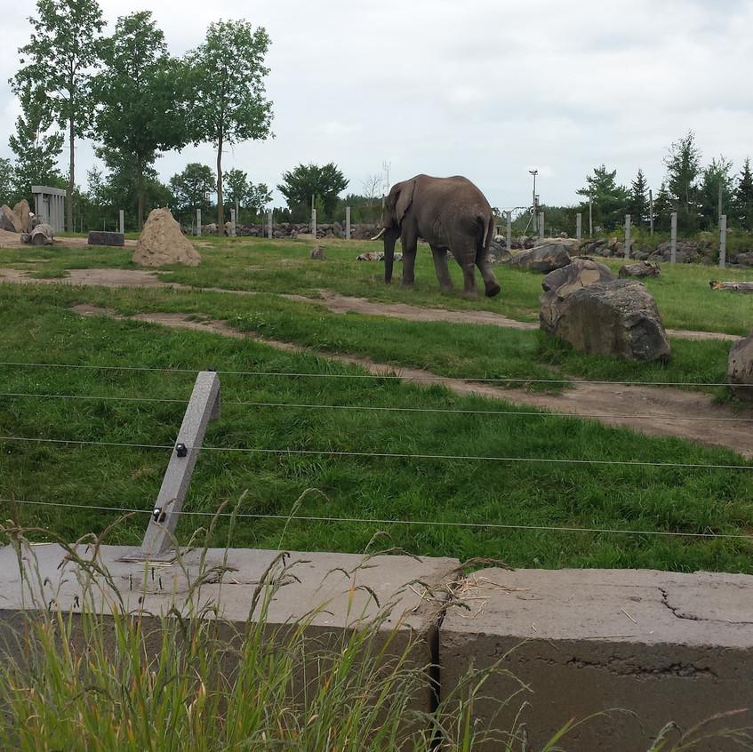 zoo 20170815_130922