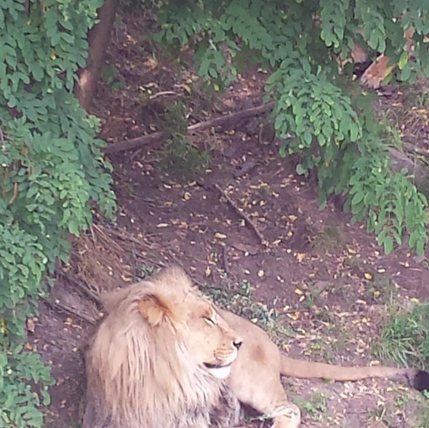 zoo 20170815_134442