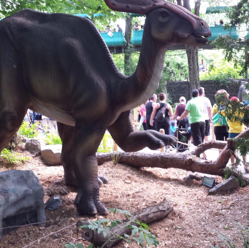 zoo 20170816_130203