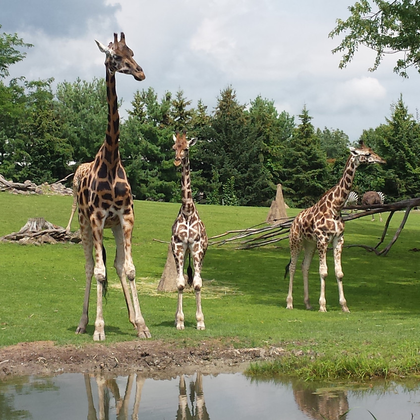 zoo 20170815_132531