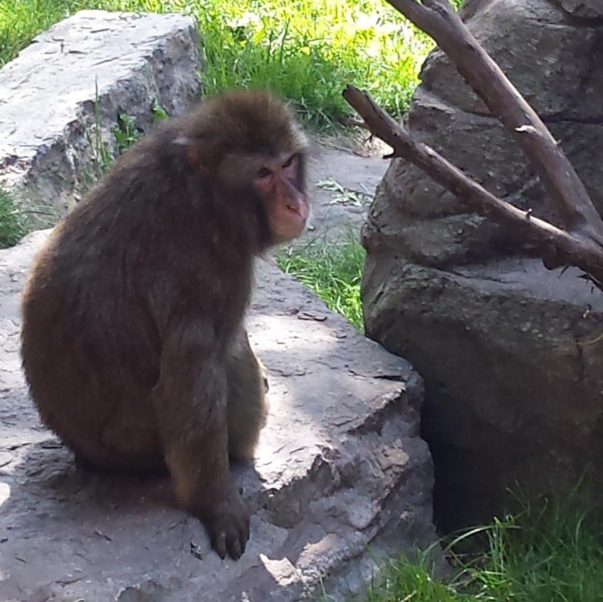 zoo 20170816_113938