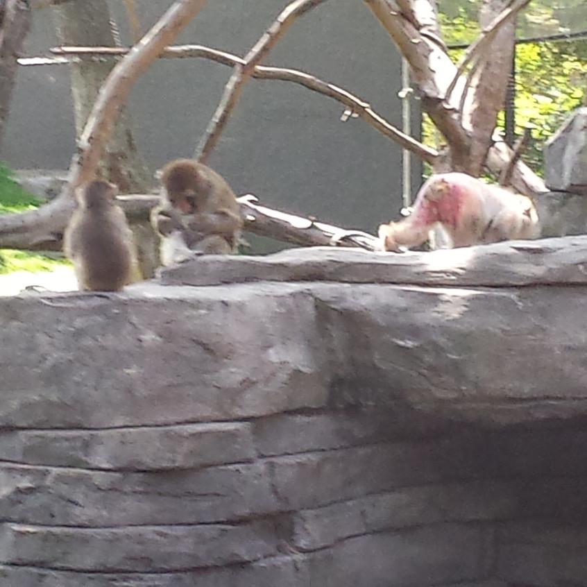 zoo 20170816_114049