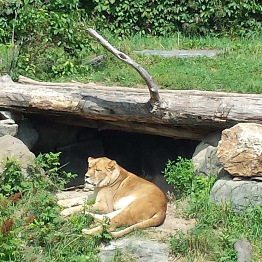 zoo 20170815_134311