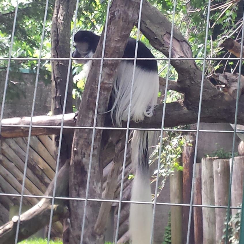 zoo 20170815_142523