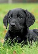 Lola Pupcard 2.jpg
