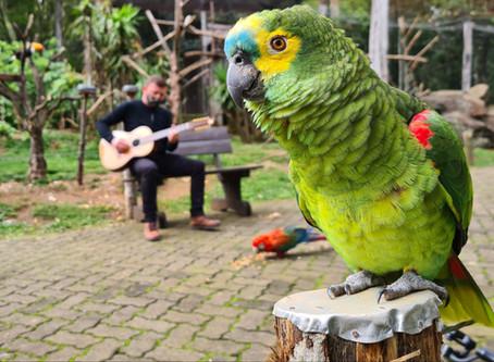 Gramadozoo comemora 12 anos com música para os animais