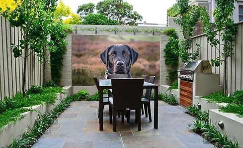 outdoor-garden-wall art_Black Labrador.j