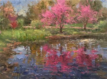 'Rosebud Reflections'