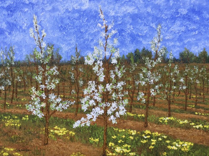 'Blossoms in Provence'