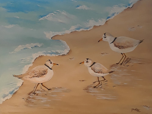 Three Plovers Piping