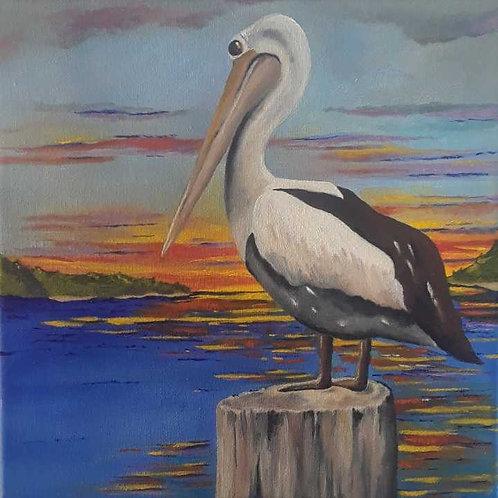 Pelican at Peace