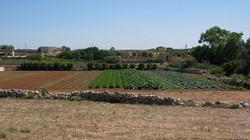 malta_farm_2
