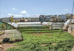 swieqi-farms