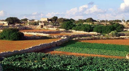 Maltese Agriculture - The Biological Path