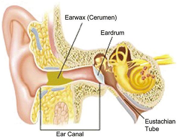 ear poster.jpg
