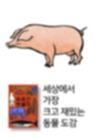 71 동물원 돼지.png