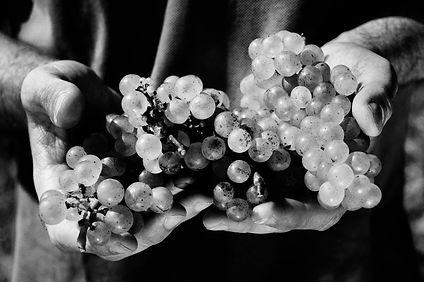 Le vin une passion ancrée