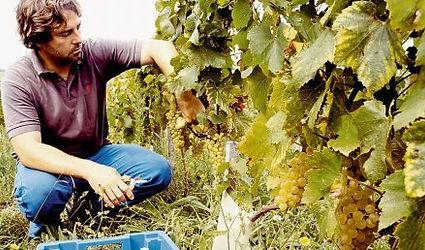 Emmanuel Poirmeur sur les vignes de la Corniche