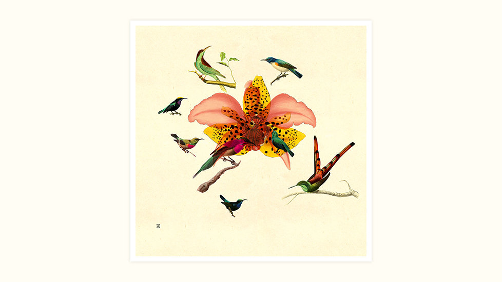 Mother of all Birds and Orchids