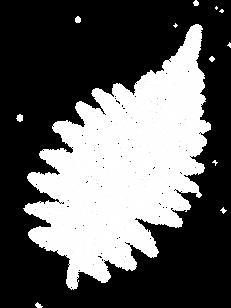 fern%20copy_edited.png