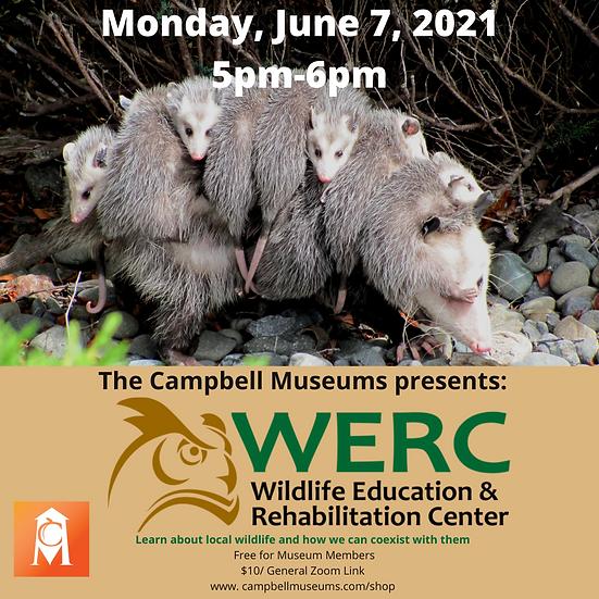 Membership Monday: The Wildlife Education & Rehabilitation Center